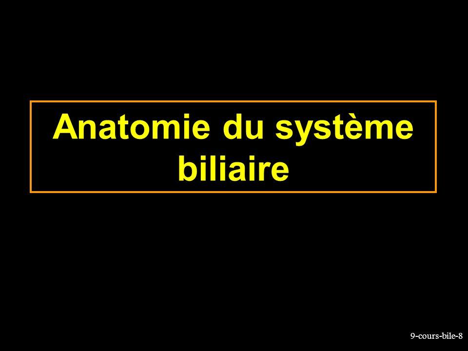 Anatomie du système biliaire