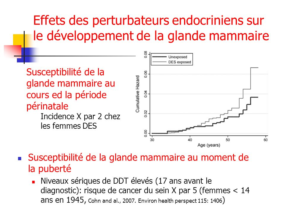 Effets des perturbateurs endocriniens sur le développement de la glande mammaire