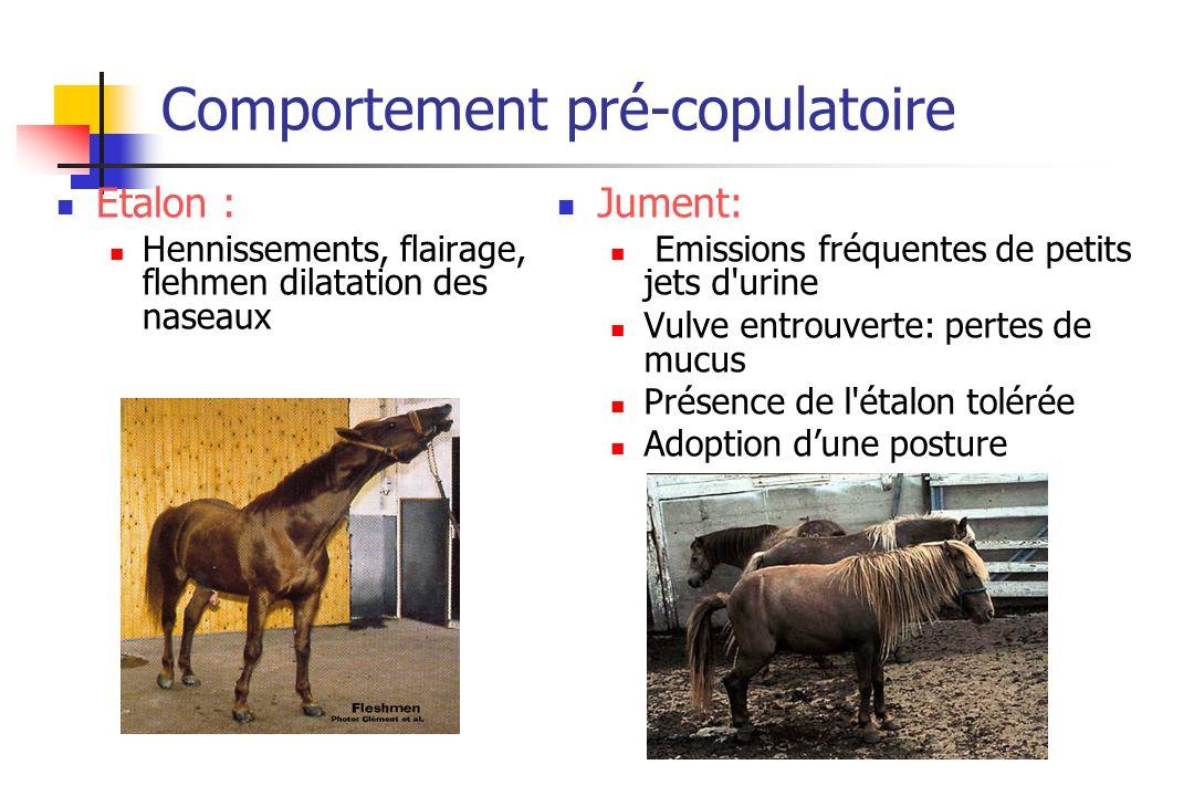 Comportement pré-copulatoire