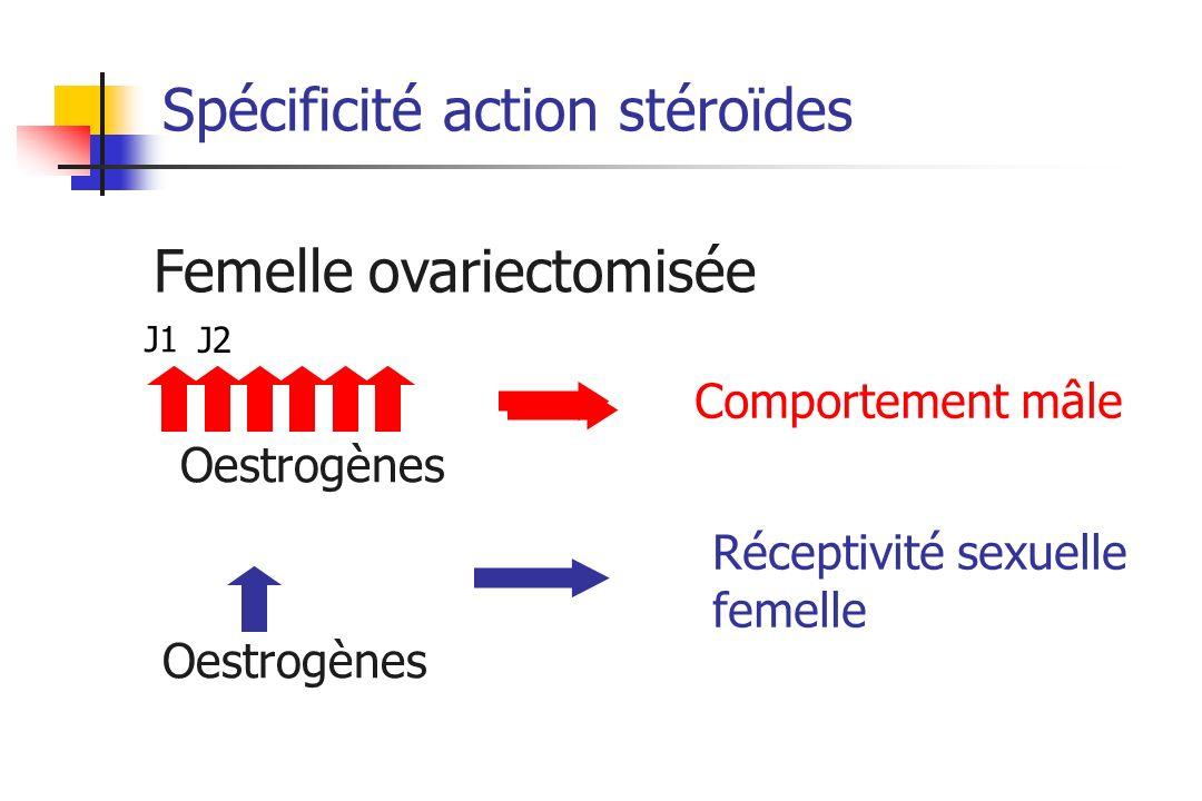 Spécificité action stéroïdes