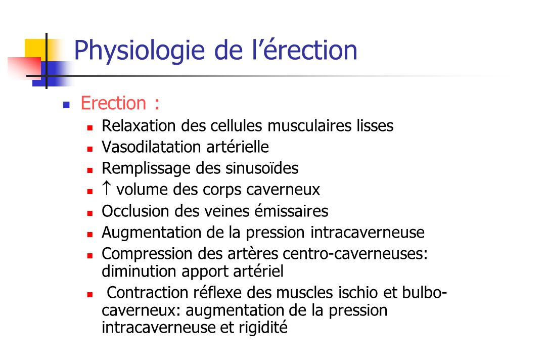 Physiologie de l'érection