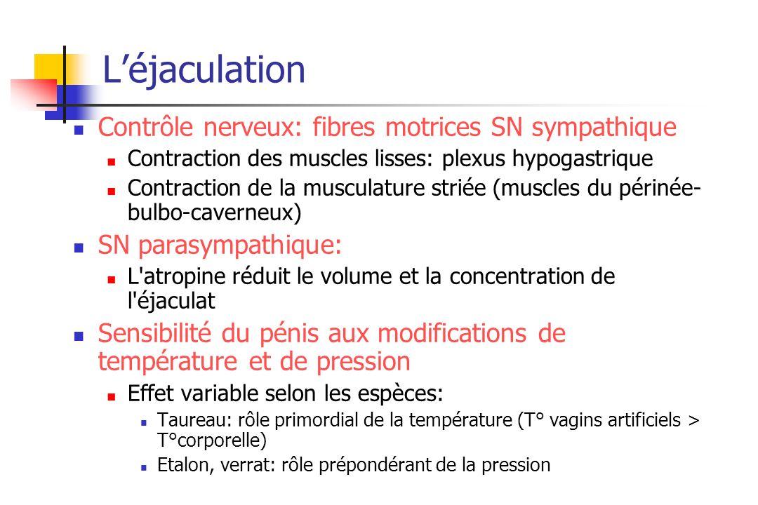 L'éjaculation Contrôle nerveux: fibres motrices SN sympathique
