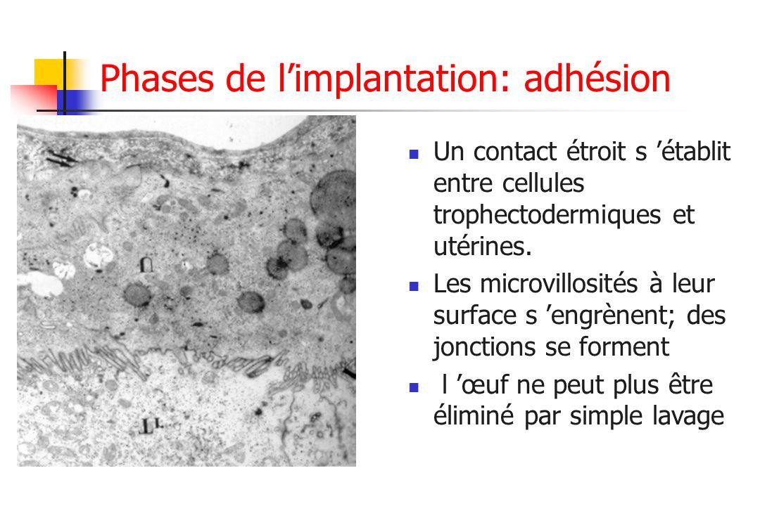 Phases de l'implantation: adhésion
