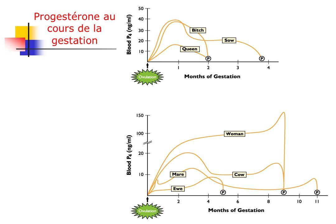 Progestérone au cours de la gestation