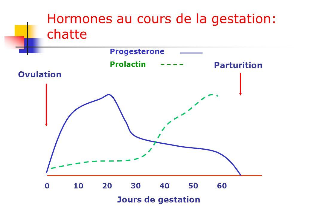 Hormones au cours de la gestation: chatte