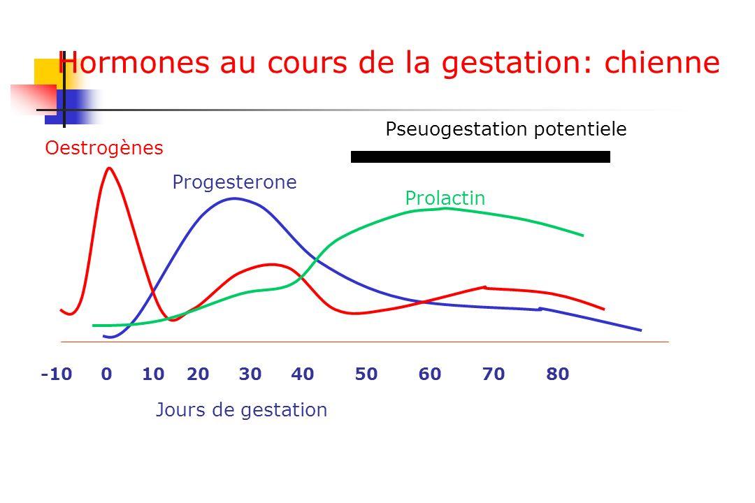 Hormones au cours de la gestation: chienne
