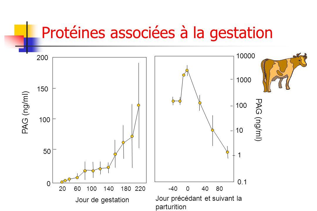 Protéines associées à la gestation