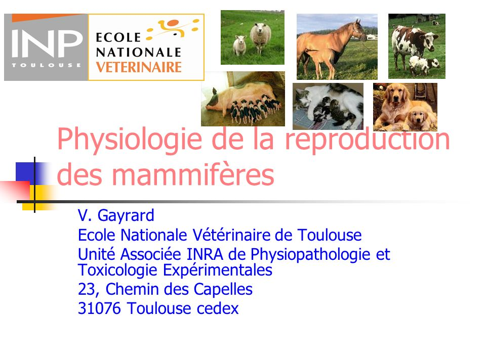 Physiologie de la reproduction des mammifères