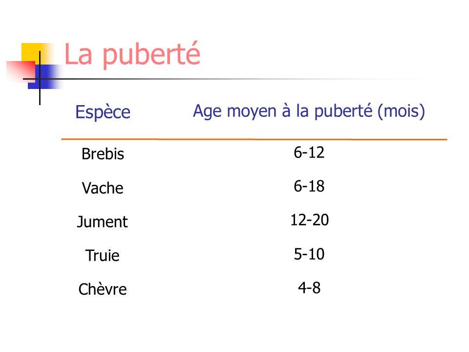 Age moyen à la puberté (mois)