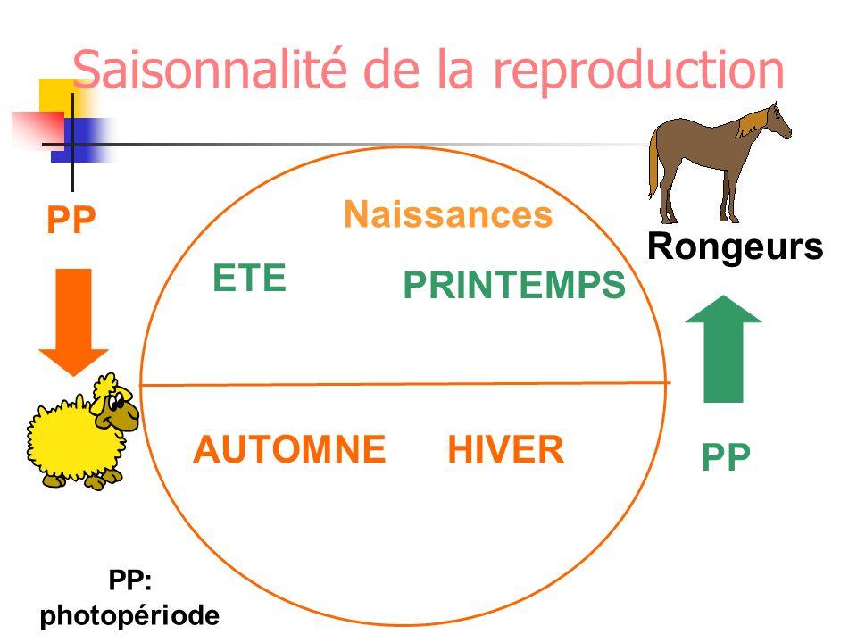 Saisonnalité de la reproduction