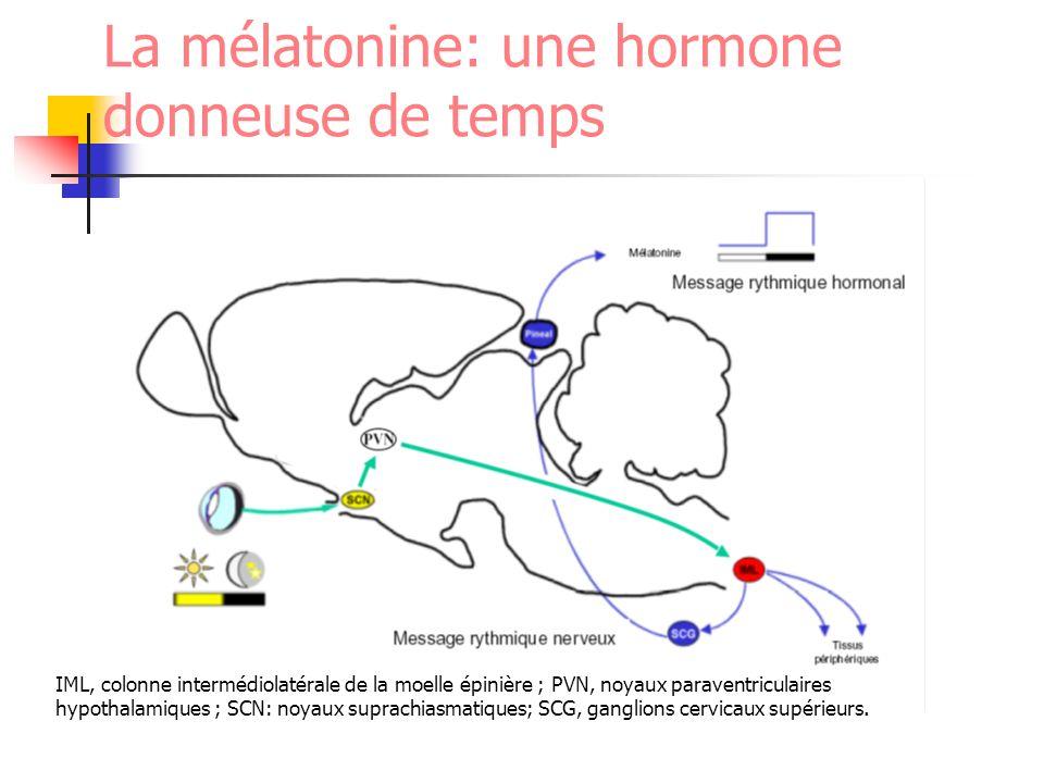 La mélatonine: une hormone donneuse de temps