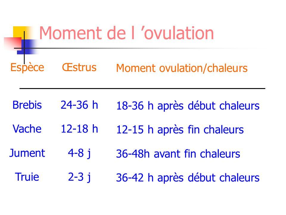 Moment de l 'ovulation Espèce Brebis Vache Jument Truie Œstrus 24-36 h