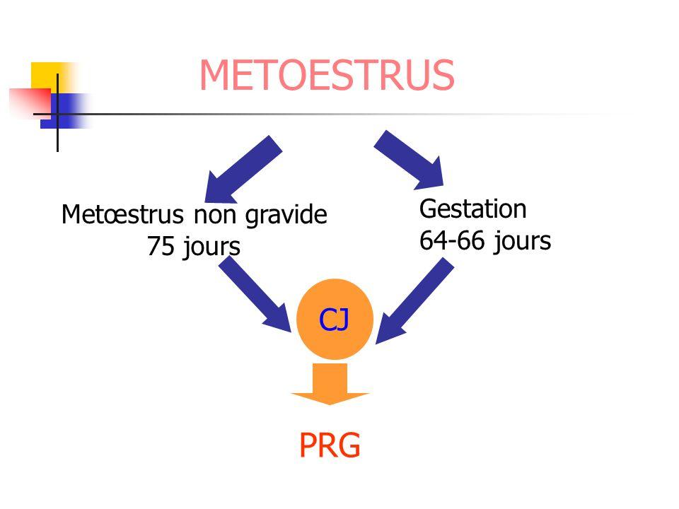 METOESTRUS Gestation 64-66 jours Metœstrus non gravide 75 jours CJ PRG