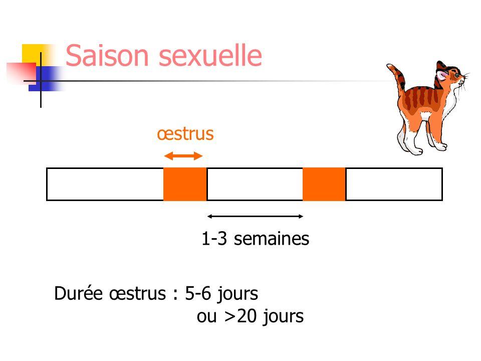 Saison sexuelle œstrus 1-3 semaines Durée œstrus : 5-6 jours