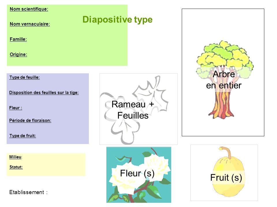 Diapositive type Arbre en entier Rameau + Feuilles Fleur (s) Fruit (s)