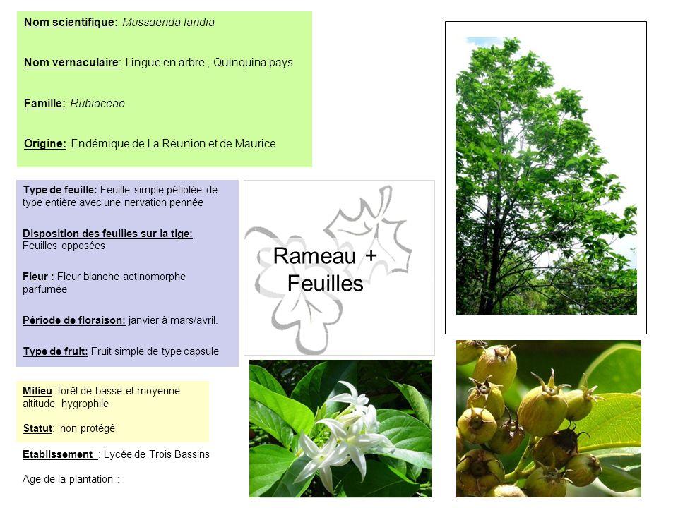 Arbre en entier Rameau + Feuilles Fleur (s) Fruit (s)