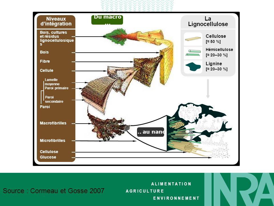 La Lignocellulose Du macro ... Niveaux d'intégration ... au nano