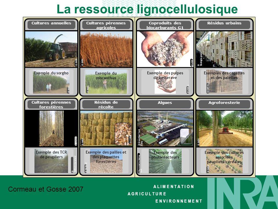 La ressource lignocellulosique