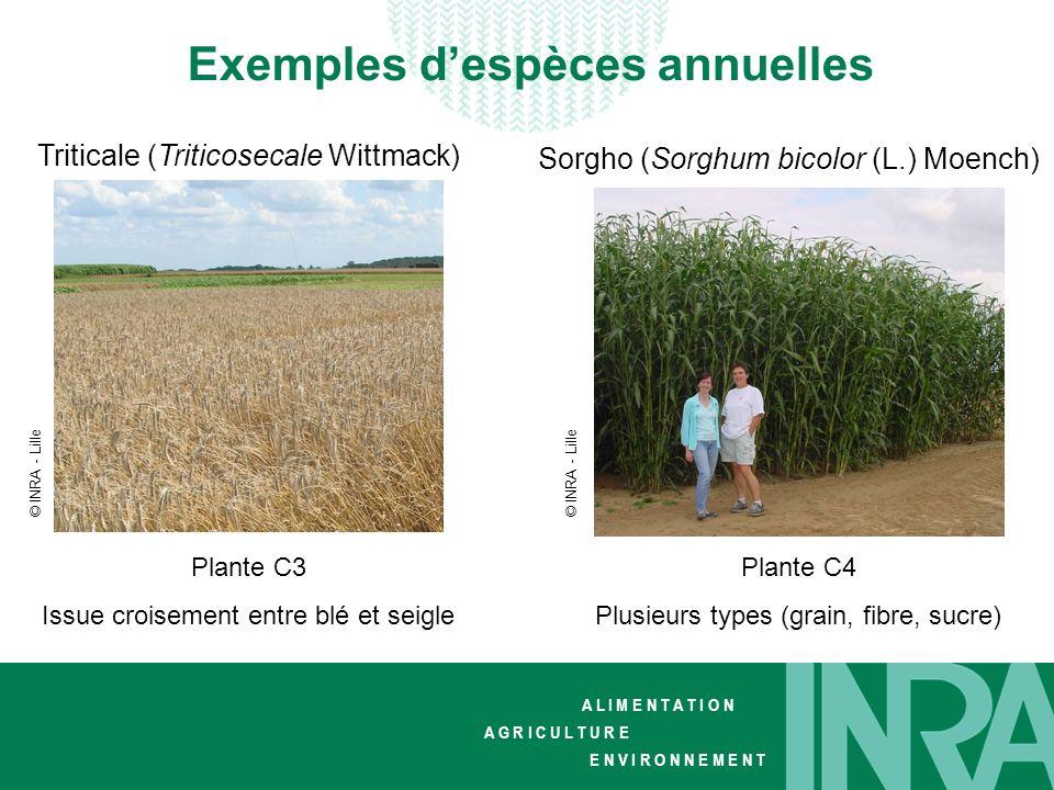 Exemples d'espèces annuelles
