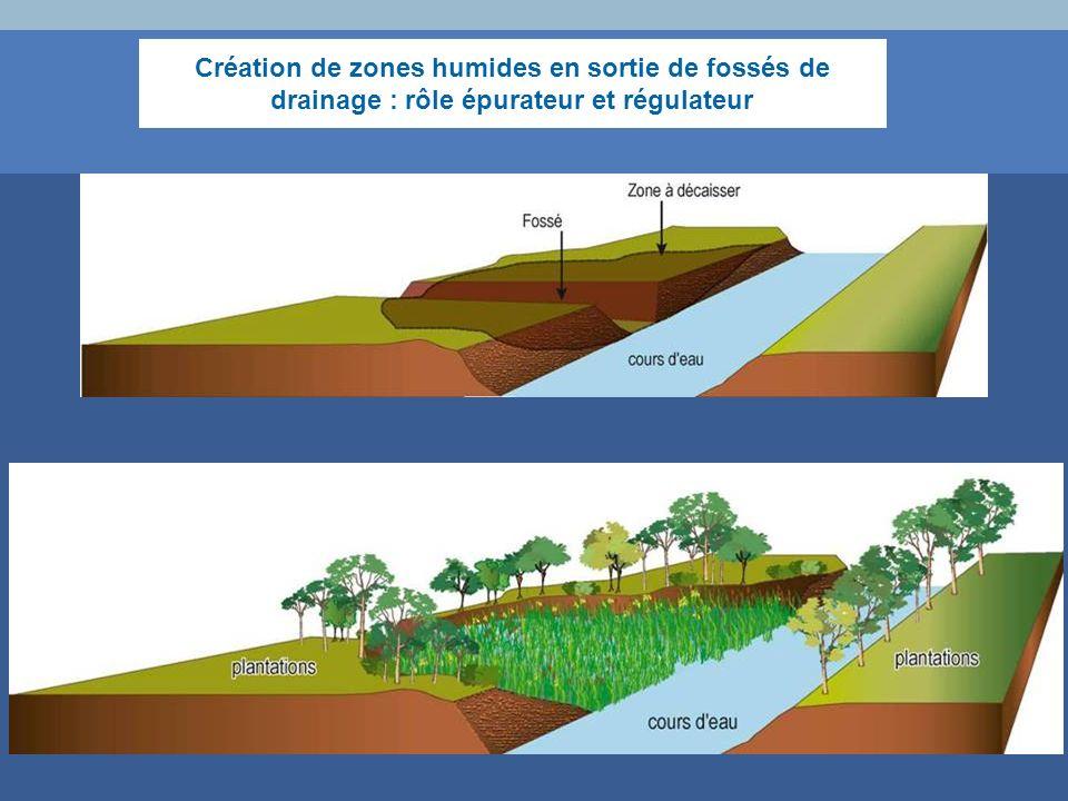 Création de zones humides en sortie de fossés de drainage : rôle épurateur et régulateur