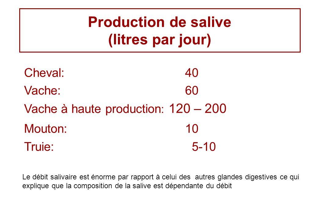Production de salive (litres par jour)