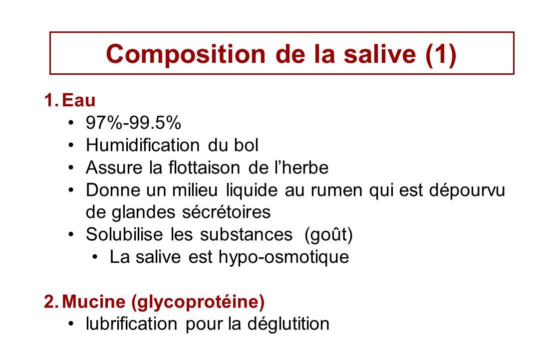 Composition de la salive (1)