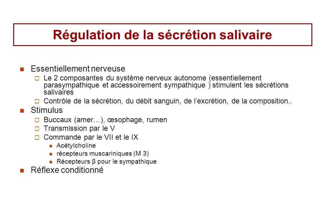 Régulation de la sécrétion salivaire
