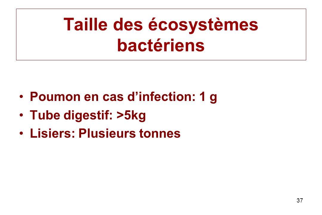 Taille des écosystèmes bactériens