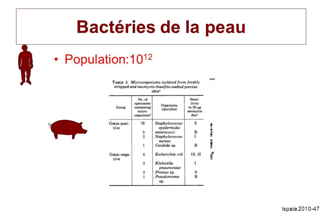 Bactéries de la peau Population:1012