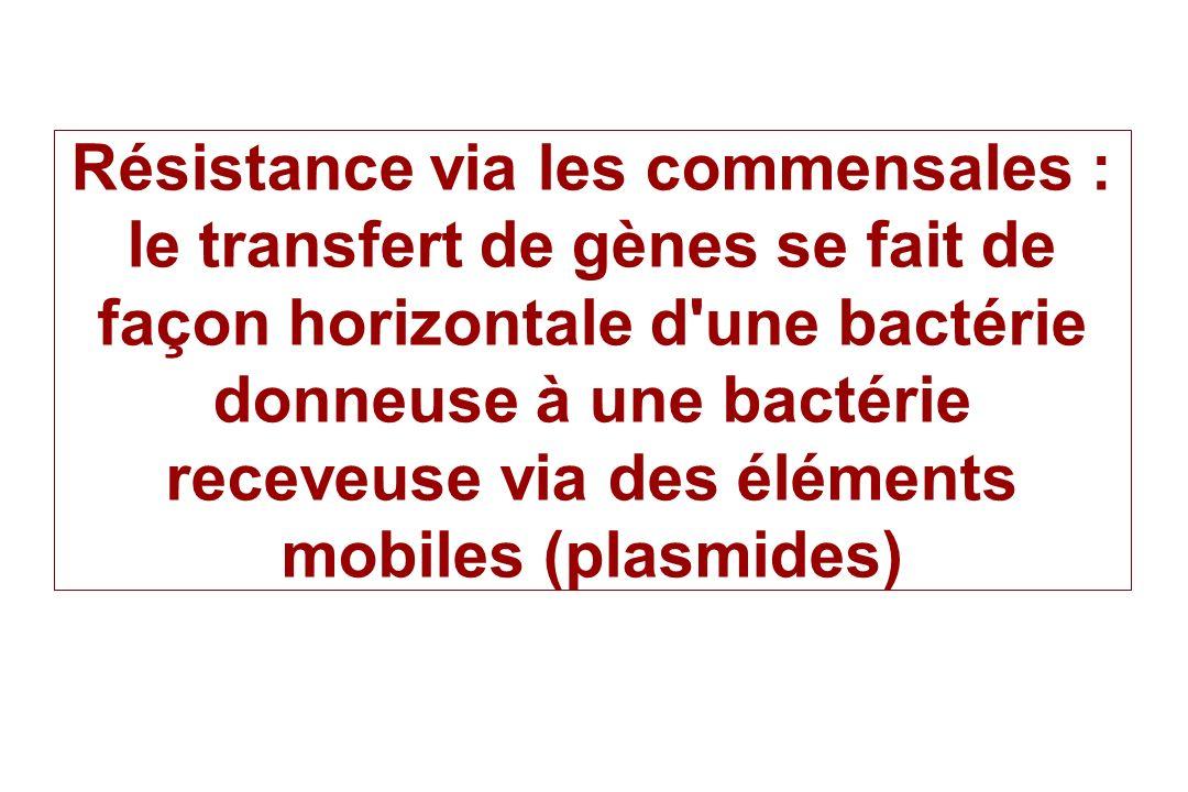 Résistance via les commensales : le transfert de gènes se fait de façon horizontale d une bactérie donneuse à une bactérie receveuse via des éléments mobiles (plasmides)