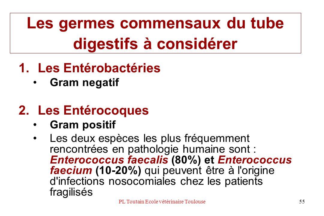 Les germes commensaux du tube digestifs à considérer