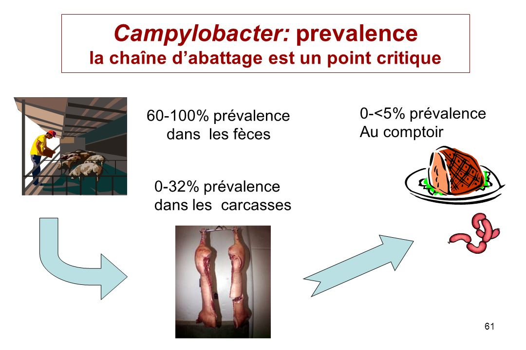Campylobacter: prevalence la chaîne d'abattage est un point critique