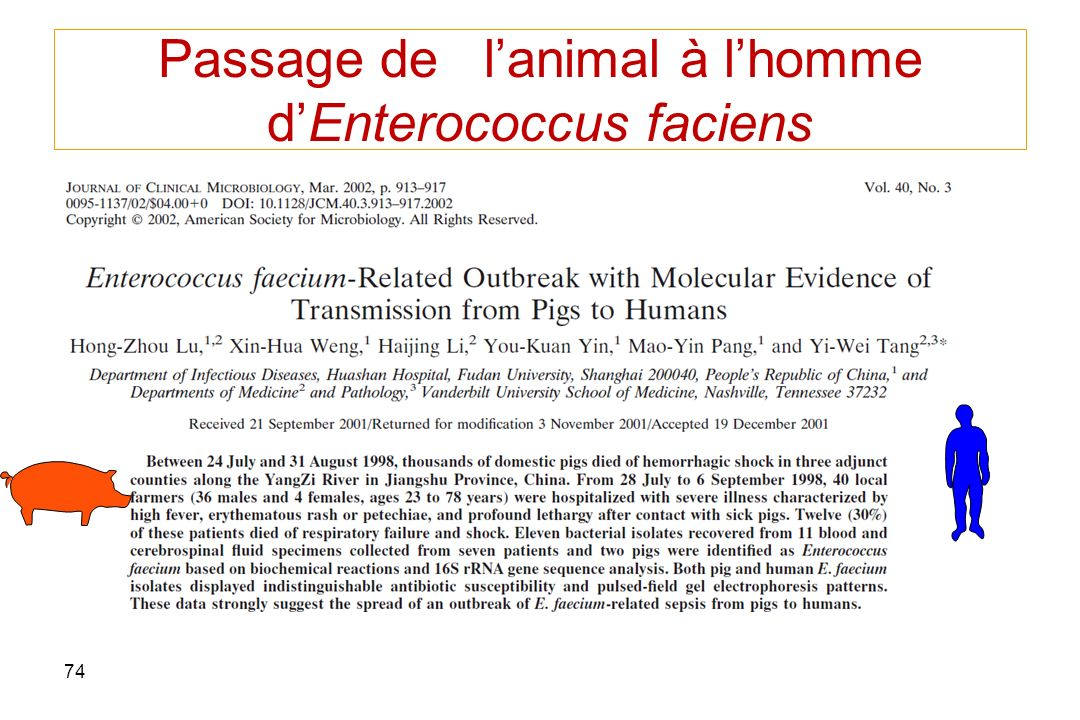 Passage de l'animal à l'homme d'Enterococcus faciens