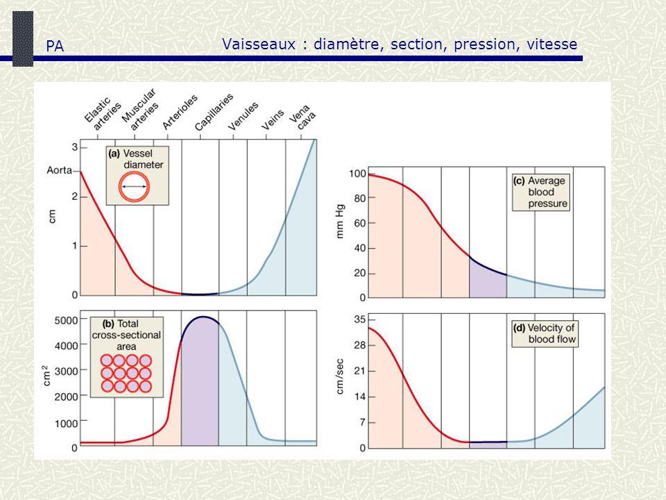 Vaisseaux : diamètre, section, pression, vitesse