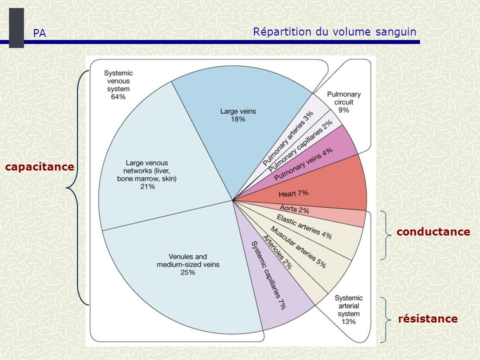 Répartition du volume sanguin