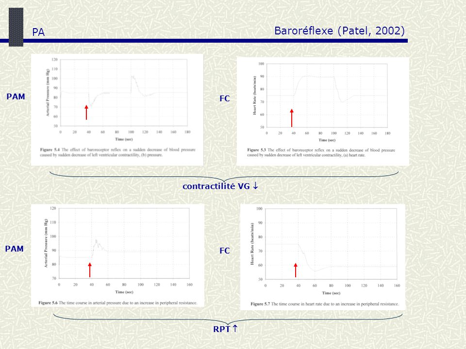 Baroréflexe (Patel, 2002) PA PAM FC contractilité VG  PAM FC RPT 