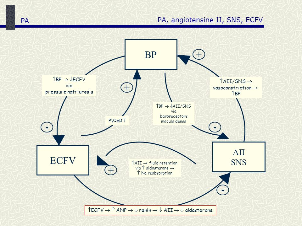 PA, angiotensine II, SNS, ECFV