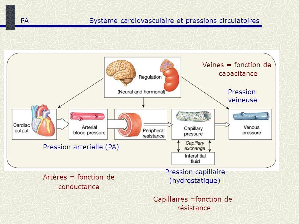 Système cardiovasculaire et pressions circulatoires
