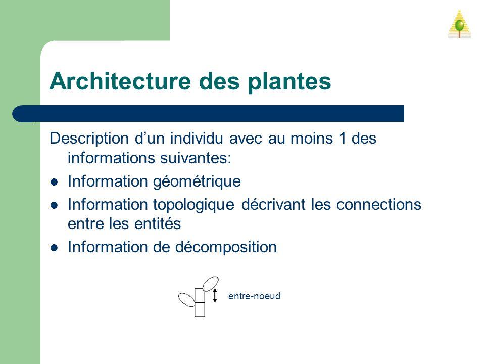 Architecture des plantes