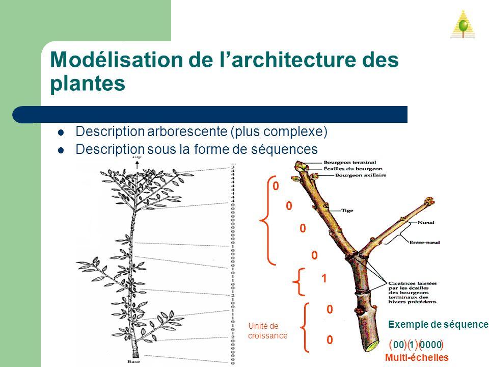 Modélisation de l'architecture des plantes