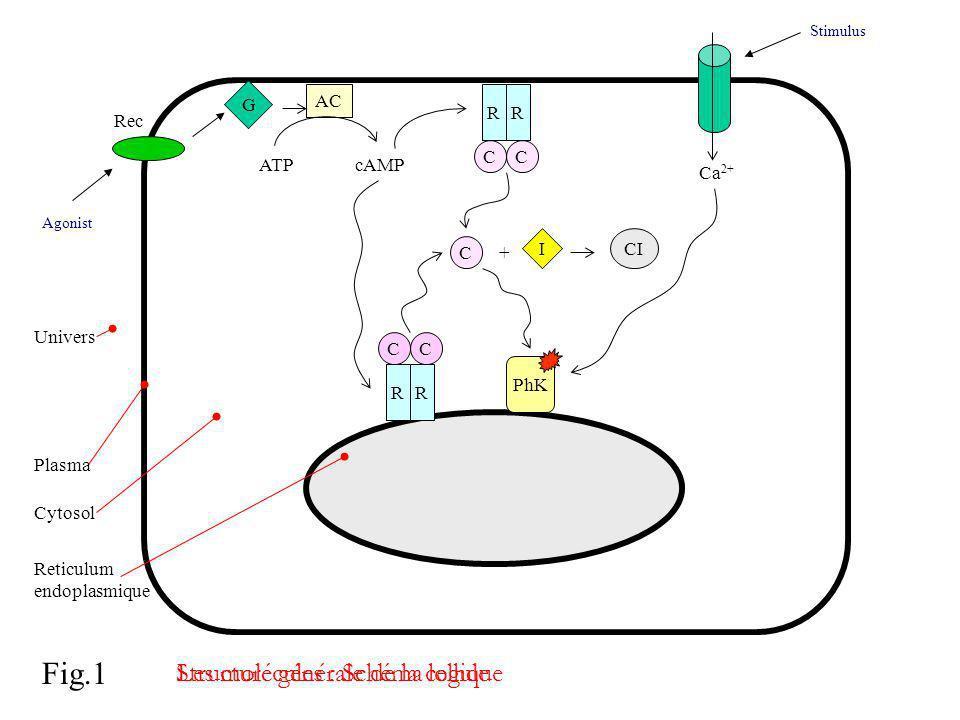 Les molécules : Schéma logique
