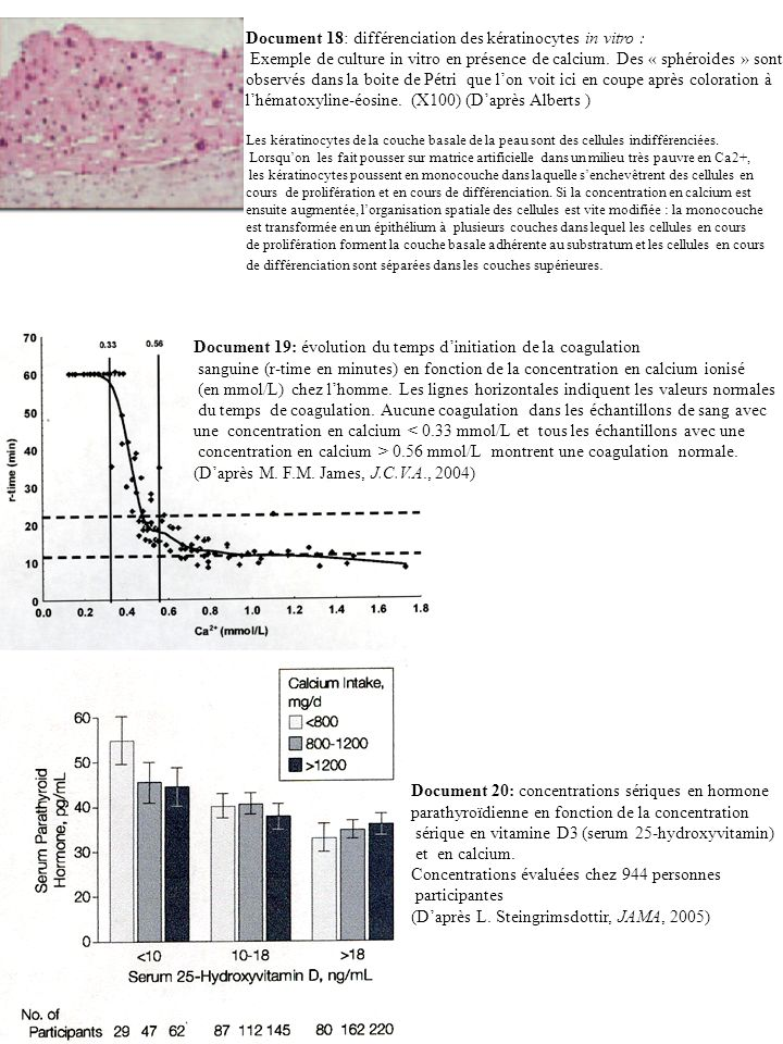 Document 18: différenciation des kératinocytes in vitro :