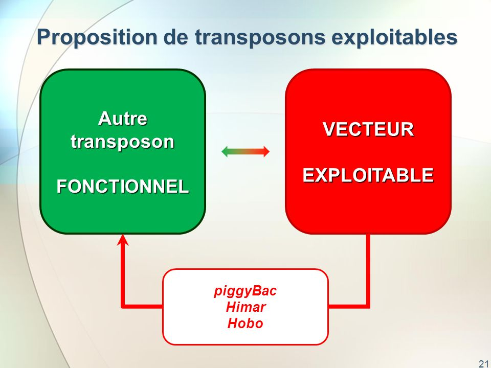 Proposition de transposons exploitables