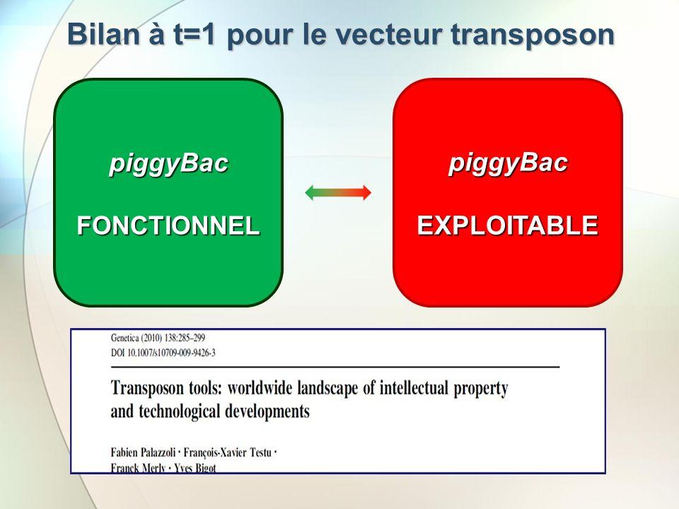 Bilan à t=1 pour le vecteur transposon
