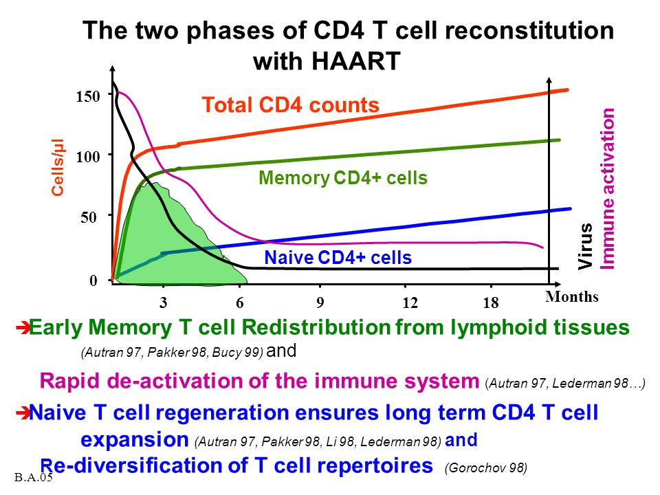 The two phases of CD4 T cell reconstitution with HAART