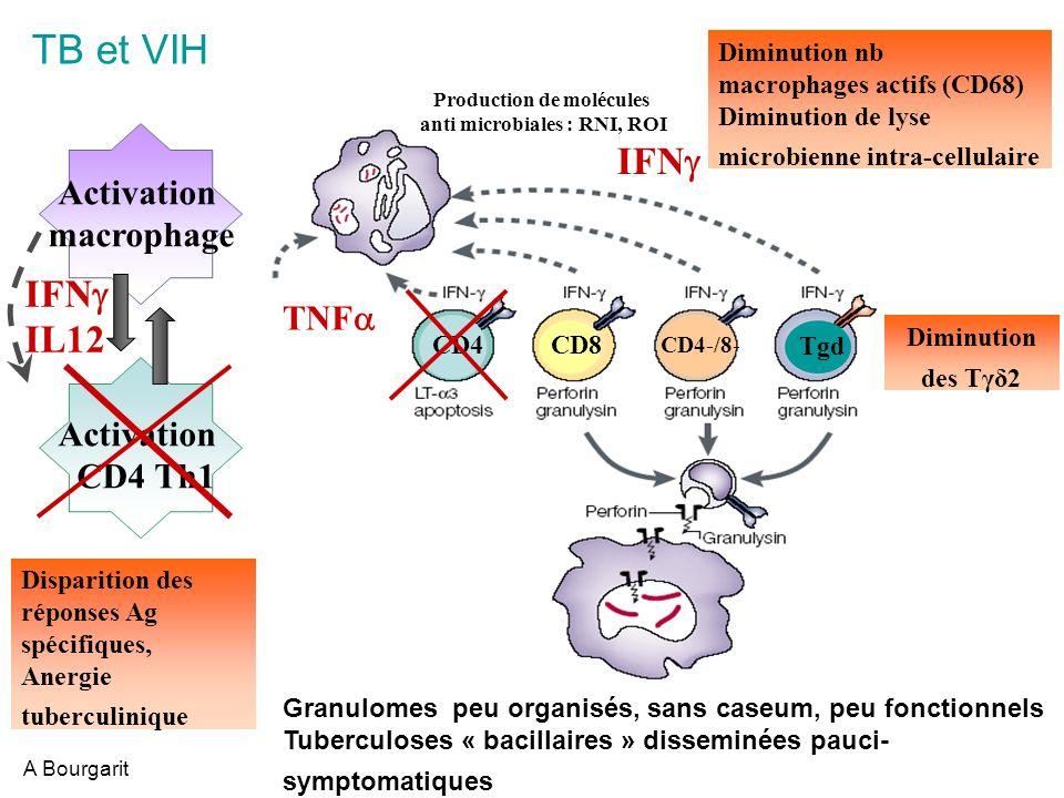Production de molécules anti microbiales : RNI, ROI