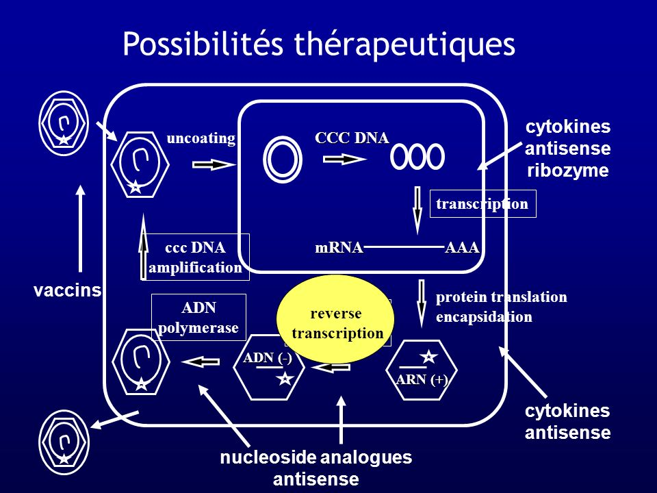 Possibilités thérapeutiques