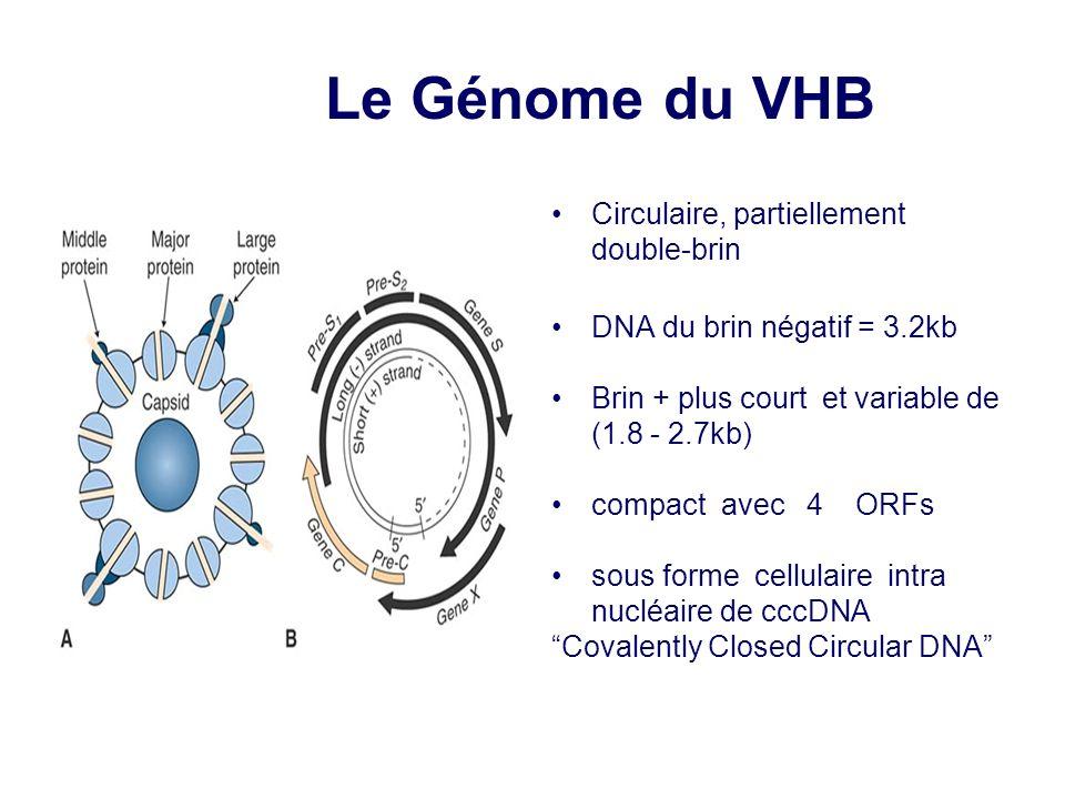 Le Génome du VHB Circulaire, partiellement double-brin