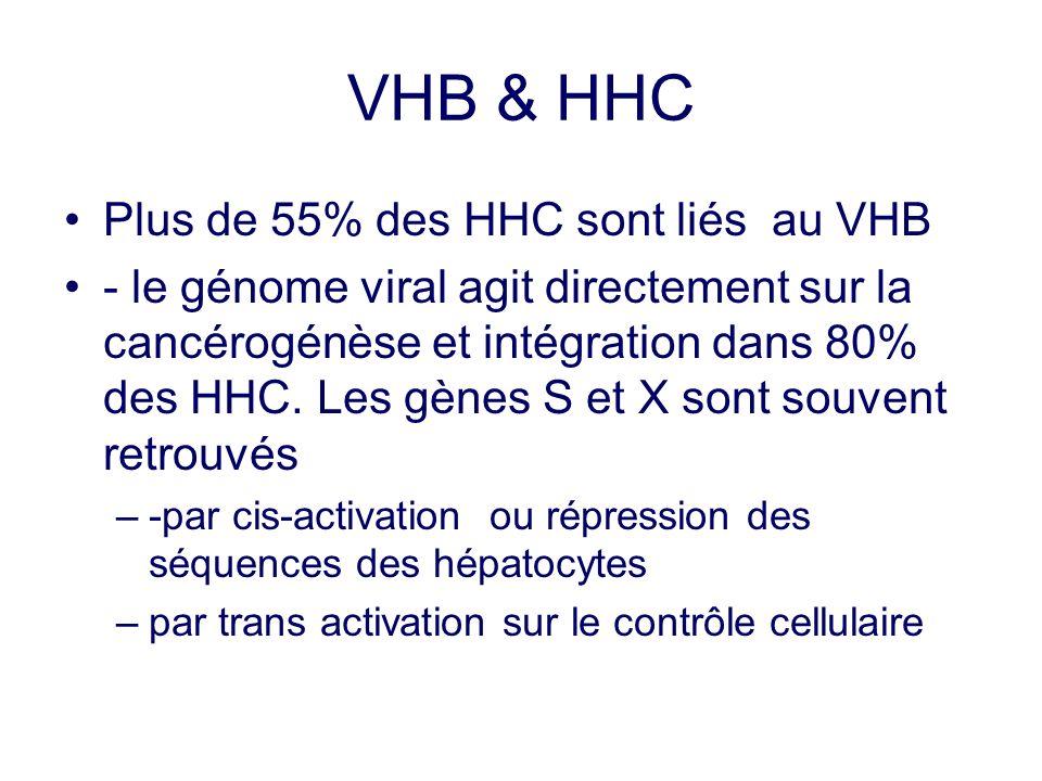 VHB & HHC Plus de 55% des HHC sont liés au VHB