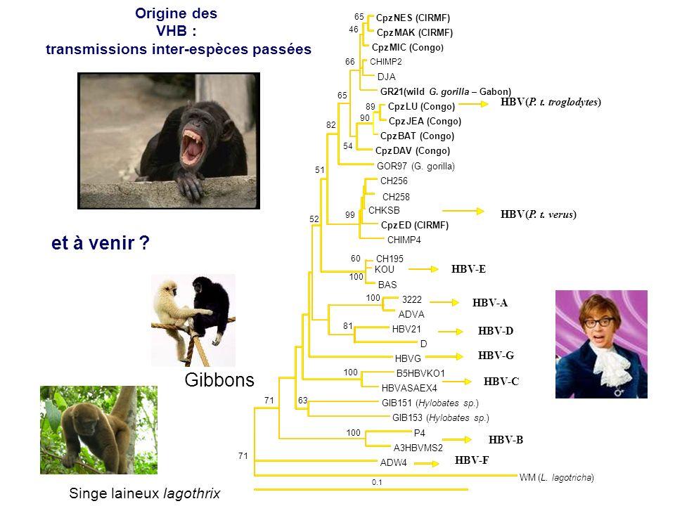 transmissions inter-espèces passées